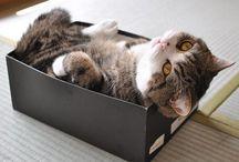 Catnaps / by Lorna Payne