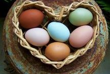 Henz free range eggs / Our business