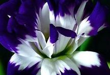 Plant Envy / by Jess Renneker