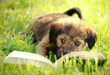 Furry Literary Friends / Cats, dogs, and other animals who share literary wisdom.