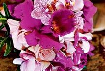 A Floral Affair  / Bringing Freshness along with a pop of color In Your Home or any where else with Hydrangeas, Roses, Flowers, Plants etc.... / by upper Ashelon services