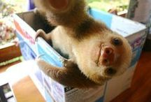 sloth obsession. / illegal amounts of cuteness exist here. / by Rachel Arnold
