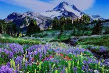 pacific nw L♥︎VE / Oregon, Washington, British Columbia + more, oh my!