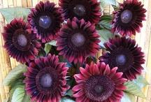 Plants Flowers - General / by Kate Griggs