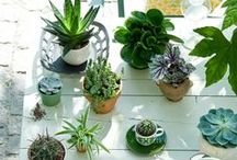 Small Space Gardening / Pinspiration to keep growing -- on your balcony or window sill!