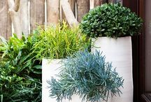 In The Garden - Au Jardin