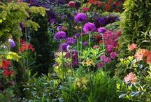 Backyard Spaces: Garden & Patio / Gardening Inspiration and Tips / by Ruth LaMarr