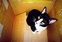 Mecka / My lovely kitty