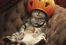 Ideas for Halloween
