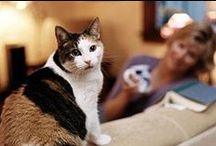 Pet Hazards and Toxins / Keep your pets safe by educating yourself! Learn what presents a hazard to your pet's health, be it plants, food, or chemicals.