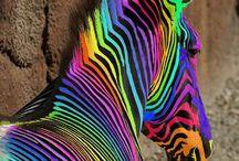 C⃣o⃣l⃣o⃣r⃣s⃣ / Color room