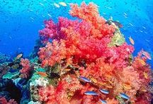 my.sea life