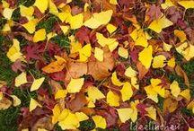 Herbst / Deko und Ideen für den Herbst