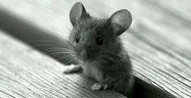 Mouses, hamsters, rats, rabbits...