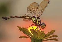 Ants, bees, dragonflies,...