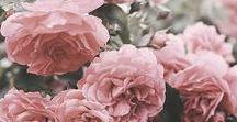 Flowers, plants,...