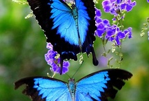 flowers n butterflies / by Meemaa Paapaa