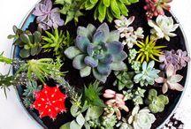 Get planting