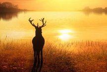 Nature / Animaux de forêts,plaines et autres