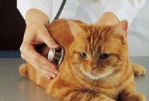 Cat Wellness Care /