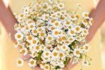 WEDDING: Pale Yellow