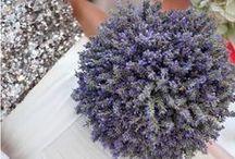WEDDING: Lavender