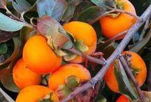 Flower Power I / Plants, Flowers, Fruits, Gardens, Greenhouses, Pools, Terra-Cotta Pots, Containers, Jars, Garden Art