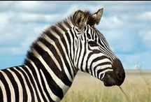 Animals / dieren opdracht mythisch wezen
