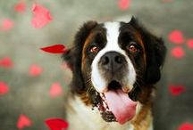 Valentine's Day Pet Ideas