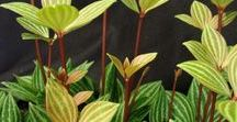 Flower Power II / Plants, Flowers, Fruits, Gardens, Greenhouses, Pools, Terra-Cotta Pots, Containers, Jars, Garden Art