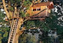 Treehouse / Treehouses