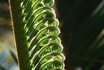 Ferns / Beautiful Ferns & Tree Ferns