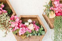 Plantas, flores y jardín
