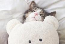 Cat Stuff / by Nancy