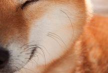 Breeds / Puppies