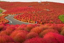 Japan / Country of my dreams.