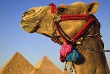 TRAVEL Middle East / The Middle East - exotic flavours, colourful spices, camel rides, picturesque deserts and so much more! Let's get inspired and travel dreaming.