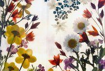 Pressed Flowers / The Art of pressed flowers.