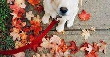 Fall / Fall Autumn Fall
