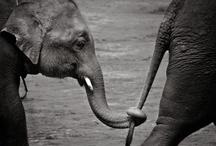 Elephants / by Jamie Rischmiller