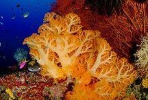 In Nature Reefs / by PJ reefs