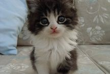 Kitties! / Love them!