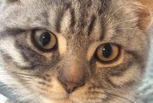 Love Cats / Geweldige foto's van geweldige katten en mijn eigen 4 katten: Joris, Smous, Lizzy en Gijs van Paberlow