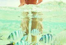 Summer  / by Selene Oramas