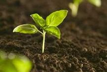 Gardening Soil Amendments! / Here are gardening soil amendment ideas and tips to improve your gardening soil naturally. We love our garden and helping you with yours! We're a family owners and operated USA garden center since 1957.