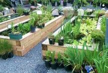 I Love My Garden! / We love gardens!  Here are garden design and plant ideas for all sorts of gardens!  We love flower gardens and vegetable gardens. Our family run USA garden center has loved gardens since 1957!