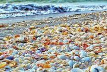 Sanibel Island / Sanibel Island, Florida