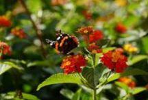 Mediterrane Pflanzen / Tolle Bilder von den schönsten mediterranen Pflanzen. Mehr findet Ihr auf http://www.mein-mediterraner-garten.de