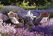 The Enchanted Garden / by Deborah Hall-Lewis