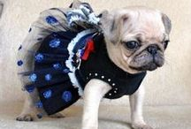 Pet skirts!!!! / Just for fun, now your pet can love skirts too!